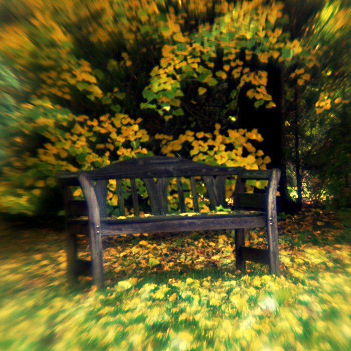 Autumn bench    (click for previous picture)