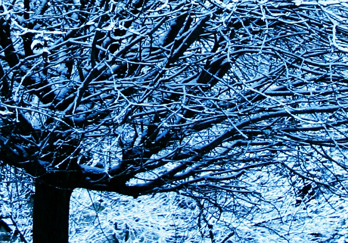 Cold tree    (click for previous picture)