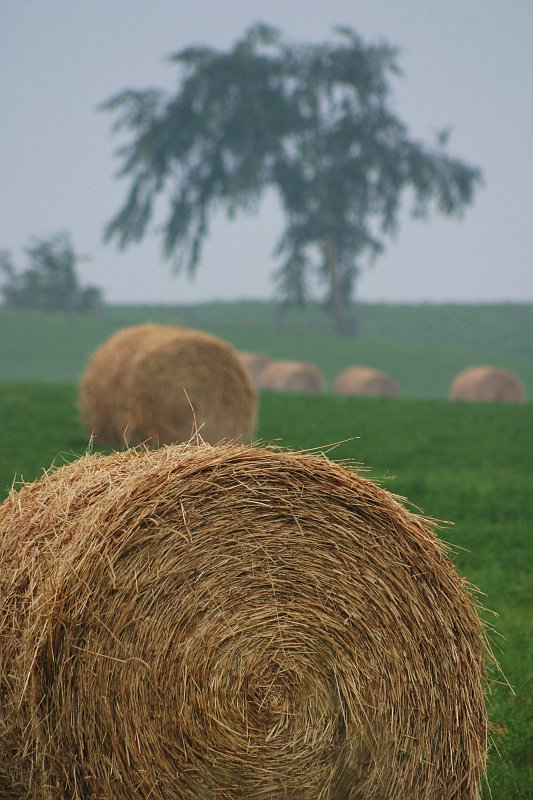 Hey! Hay!    (click for previous picture)