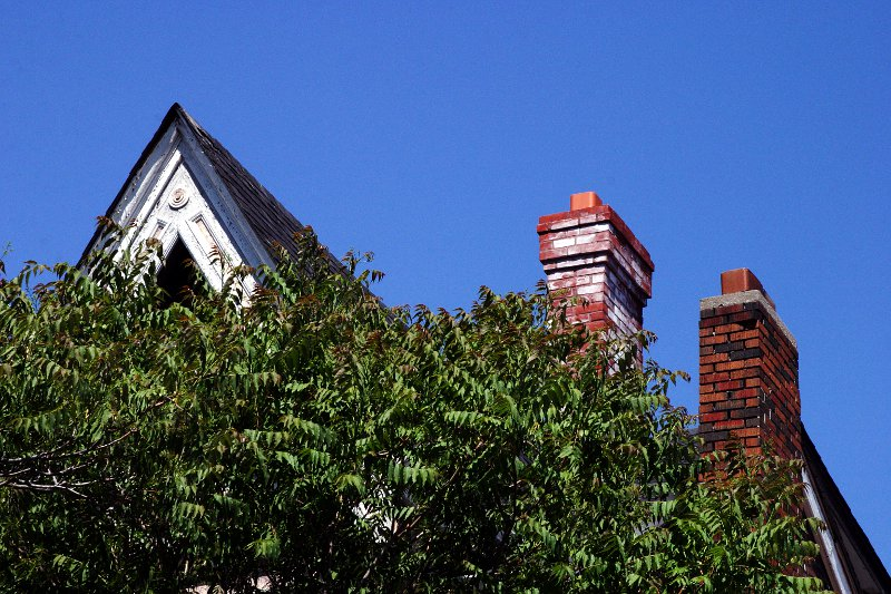 Kensington Market roof and trees    (click for previous picture)