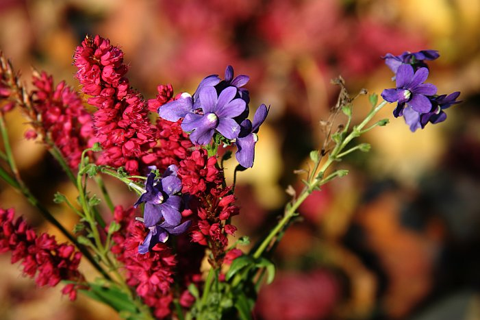November flowers    (click for previous picture)