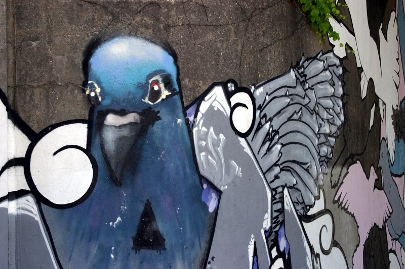 Pigeon Mural 3    (click for previous picture)