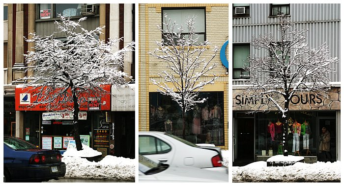 Yonge Street winter trees    (click for previous picture)